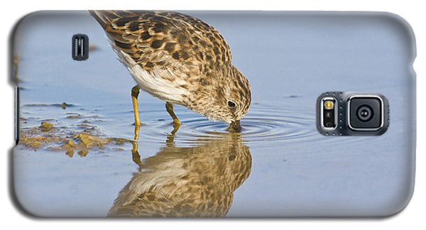 Least Sandpiper With A Reflection  Galaxy S5 Case