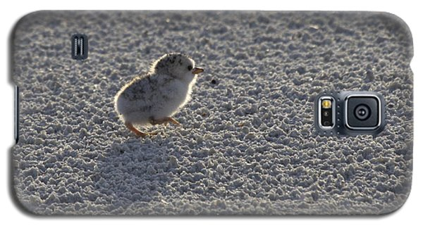 Least Tern Chick Galaxy S5 Case