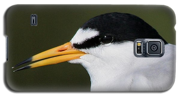 Galaxy S5 Case featuring the photograph Least Tern Portrait by Bob and Jan Shriner