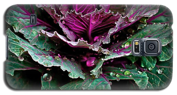 Decorative Cabbage After Rain Photograph Galaxy S5 Case by Walt Foegelle