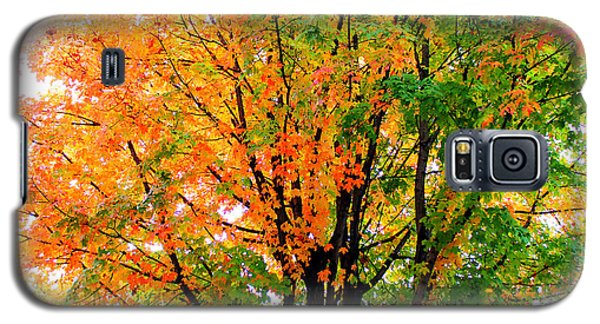Leaves Changing Colors Galaxy S5 Case