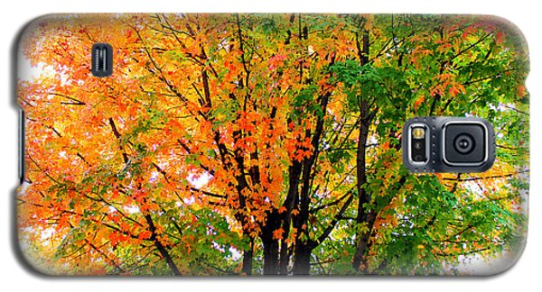 Leaves Changing Colors Galaxy S5 Case by Cynthia Guinn