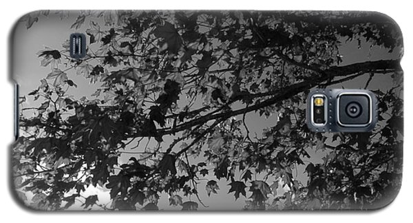 Leaves On A Tree Galaxy S5 Case