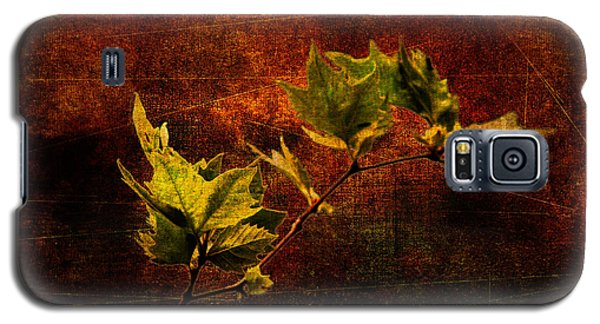Leaves On Texture Galaxy S5 Case