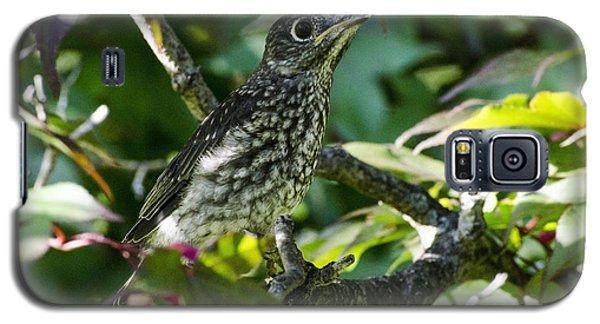 Left The Nest Galaxy S5 Case by Judy Wolinsky