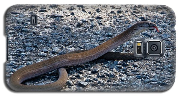 Legless Lizard Or A Snake ? Galaxy S5 Case by Miroslava Jurcik