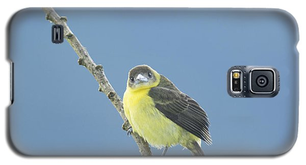 Lemon-rumped Tanager Galaxy S5 Case