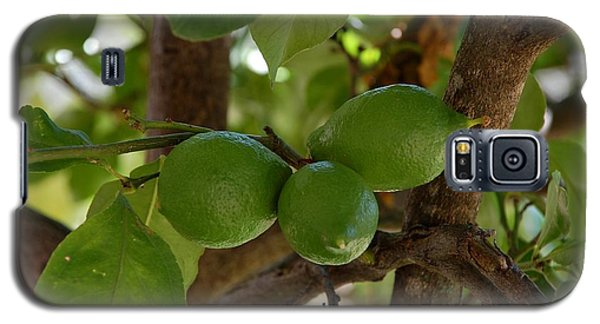 Lemons Trio Galaxy S5 Case by Dany Lison