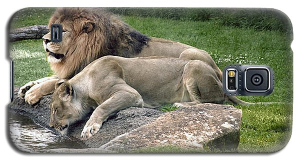Leo And Una - Twin Male And Female Lions At The University Of North Alabama Galaxy S5 Case
