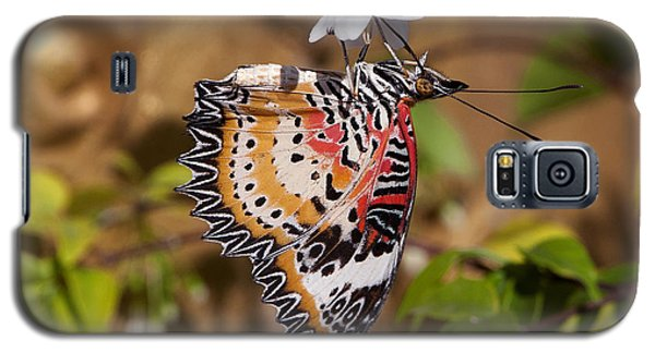 Galaxy S5 Case featuring the photograph Leopard Lacewing Butterfly Dthu619 by Gerry Gantt