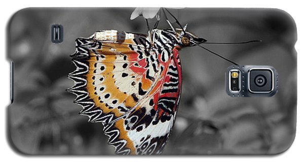 Galaxy S5 Case featuring the photograph Leopard Lacewing Butterfly Dthu619bw by Gerry Gantt