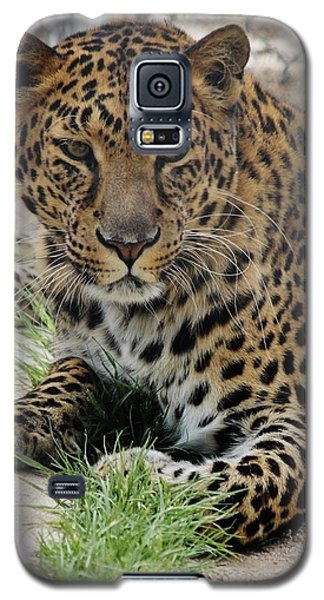 Leopard Lounging 1 Galaxy S5 Case by Diane Alexander