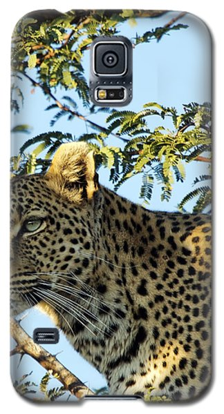 Leopard Photography Galaxy S5 Case