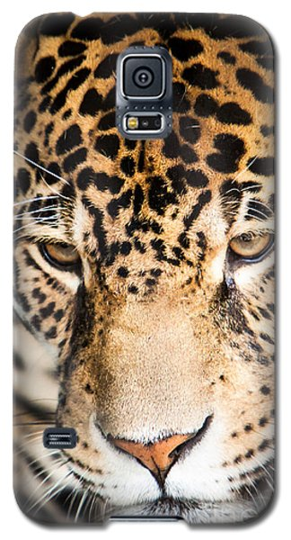 Galaxy S5 Case featuring the photograph Leopard Resting by John Wadleigh