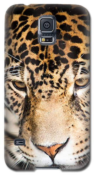 Leopard Resting Galaxy S5 Case