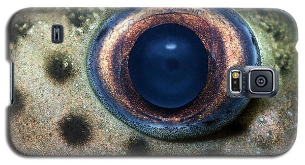 Leopard Sailfin Pleco Eye Abstract Galaxy S5 Case by Nigel Downer