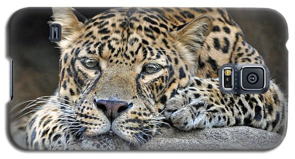 Galaxy S5 Case featuring the photograph Leopard by Savannah Gibbs