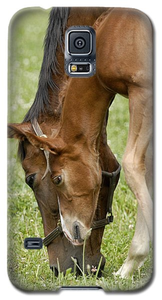 Galaxy S5 Case featuring the photograph Lessons From Mom by Sami Martin