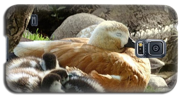 Let Sleeping Ducks Lie Galaxy S5 Case