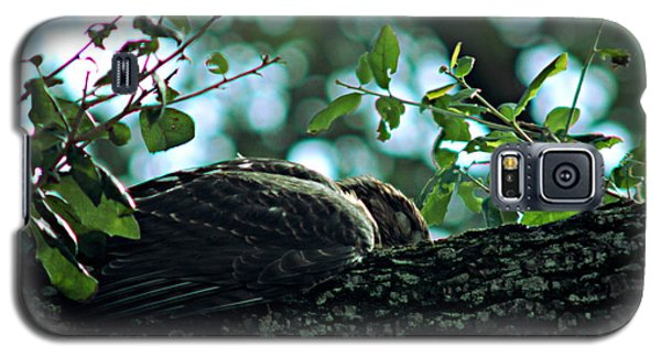Let Sleeping Hawks Lie Galaxy S5 Case by Greg Allore
