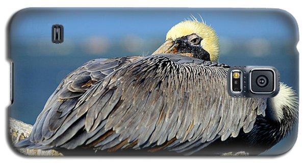 Let Sleeping Pelicans Lie Galaxy S5 Case