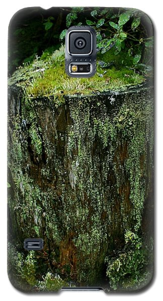 Galaxy S5 Case featuring the photograph Lichen And Moss Covered Stump by Amanda Holmes Tzafrir