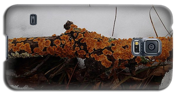 Galaxy S5 Case featuring the photograph Lichen N'snow by Robert Nickologianis