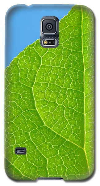 Life Of A Leaf Galaxy S5 Case by Joan Herwig