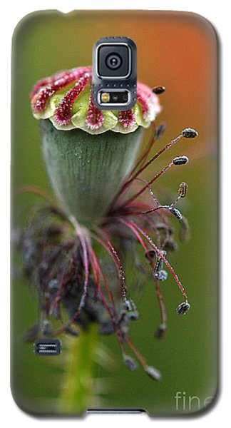 Galaxy S5 Case featuring the photograph Life's Fruit by Simona Ghidini