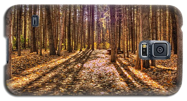 Light In The Forest Galaxy S5 Case by Jim Sauchyn