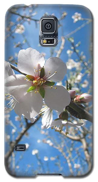 Like Stars In The Sky - Almond Blossoms Of Spring Galaxy S5 Case