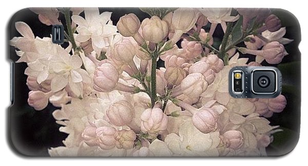 Lilacs Are Blooming Galaxy S5 Case by Christy Beckwith