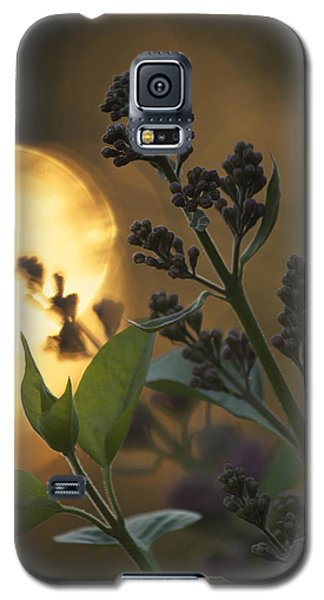 Lilacs At Sunset Galaxy S5 Case by Penny Meyers