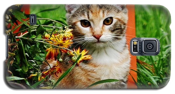Galaxy S5 Case featuring the photograph Lily Garden Cat by VLee Watson
