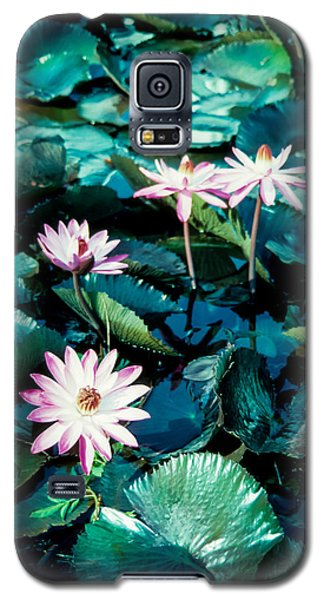 Lily Galaxy S5 Case by Randy Sylvia