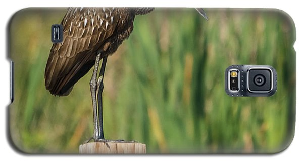 Limpkin Galaxy S5 Case