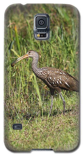 Galaxy S5 Case featuring the photograph Limpkin With Apple Snail by Christiane Schulze Art And Photography