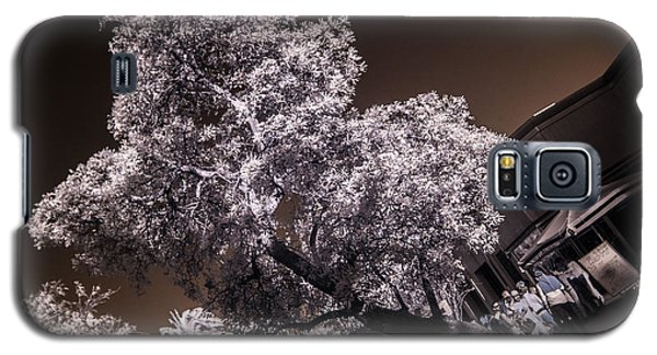 Lincoln Road Tree Galaxy S5 Case
