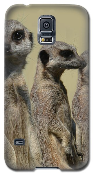 Line Dancing Meerkats Galaxy S5 Case