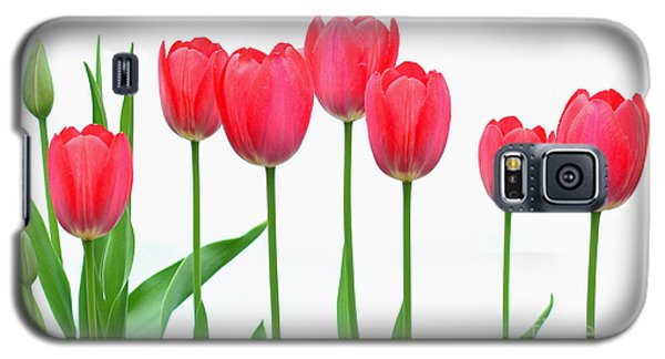Line Of Tulips Galaxy S5 Case by Steve Augustin