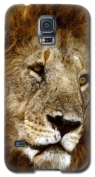 Lion 01 Galaxy S5 Case by Wally Hampton