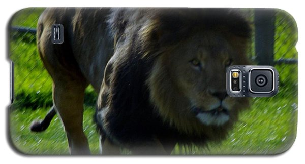 Lion 4 Galaxy S5 Case
