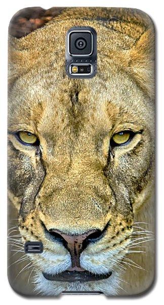 Lion Closeup Galaxy S5 Case
