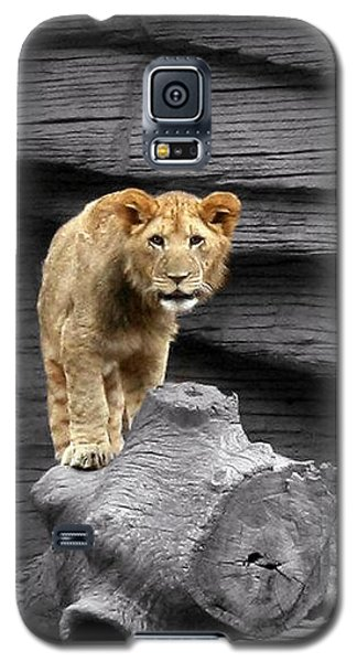 Galaxy S5 Case featuring the photograph Lion Cub by Cathy Harper