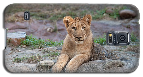 Galaxy S5 Case featuring the photograph Lion Cub by John Black