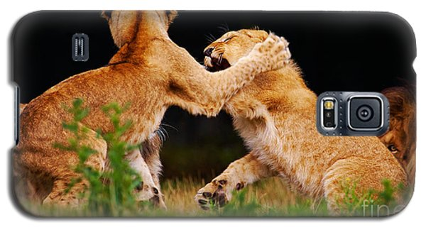 Galaxy S5 Case featuring the photograph Lion Cubs Playing In The Grass by Nick  Biemans