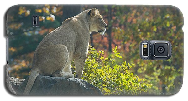 Lion In Autumn Galaxy S5 Case by Chris Scroggins