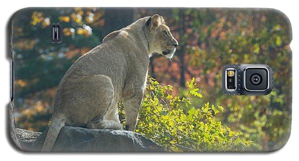 Lion In Autumn Galaxy S5 Case