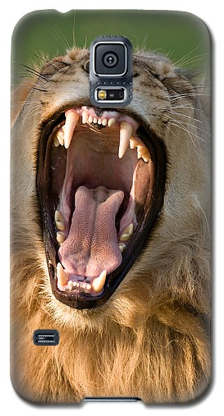 Lion Galaxy S5 Case by Johan Swanepoel