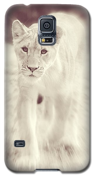 Lion Spirit Animal Galaxy S5 Case by Chris Scroggins